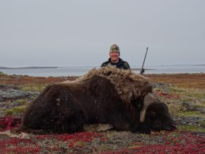 Mark Reed Musk Ox